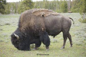 201005-Yellowstone-035
